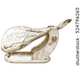 vector antique engraving... | Shutterstock .eps vector #524796265
