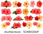 Stock photo collection of colored hibiscus flowers with leaves isolated on white background flat lay top view 524842069