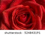 Stock photo close up of a red rose with water droplets 524843191