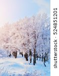 winter landscape in sunlight  ... | Shutterstock . vector #524851201