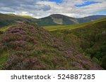 Heather Hills Of Scotland