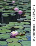 water lily or lotus  aquatic... | Shutterstock . vector #524891941