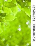 beech leaf | Shutterstock . vector #524909134