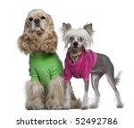 dressed american cocker spaniel ... | Shutterstock . vector #52492786