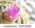 the cactus flower in garden
