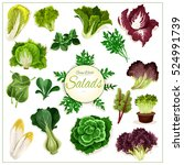 salad vegetables. vector... | Shutterstock .eps vector #524991739