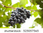 The Bunch Of Grape Fruit At...
