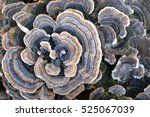 nature macro photography of... | Shutterstock . vector #525067039