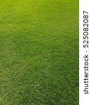 fresh green grass texture... | Shutterstock . vector #525082087