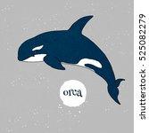 Orca Vector Illustration....