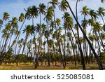 kapuaiwa coconut grove is one... | Shutterstock . vector #525085081