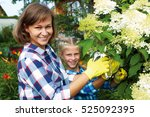 the child and the parent cut... | Shutterstock . vector #525092395