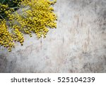 mimosa flowers on a wooden... | Shutterstock . vector #525104239