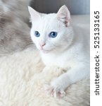 Small photo of White cat with blue eyes with claws splayed