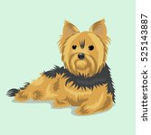 yorkshire terrier dog at one... | Shutterstock .eps vector #525143887