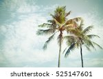 copy space of tropical palm... | Shutterstock . vector #525147601