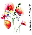 red poppies flowers  watercolor ... | Shutterstock . vector #525204229