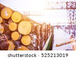 pile of wood logs. wood logs... | Shutterstock . vector #525213019