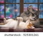 Cute Ginger Kitten Lying Near ...
