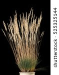 Closeup Of Dry Grass With...