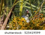 Small photo of African Green Pigeon