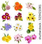 Stock photo assorted season flowers isolated 525421081