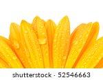 Gerber Petals With Water Drops...