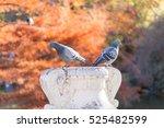 two birds on vase sculpture in... | Shutterstock . vector #525482599