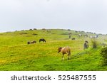 a group of wild horses is... | Shutterstock . vector #525487555