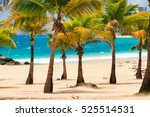 beautiful tropical palm trees... | Shutterstock . vector #525514531