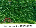 wall with green ivy  bicycle... | Shutterstock . vector #525531271