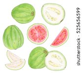 guava. hand drawn set of fruits ... | Shutterstock . vector #525656599