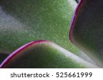 Macro View Of Succulent Plant...