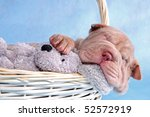 Stock photo cute puppy having a comfy sleep in a basket 52572919