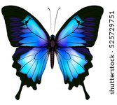 Butterfly Vector Illustration....