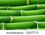 close-up of young bamboo sticks - stock photo