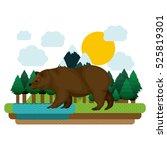 isolated bear animal design
