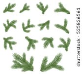 spruce branch. vector... | Shutterstock .eps vector #525826561