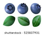 set of blueberries and leaves... | Shutterstock . vector #525837931