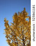 sky autumn | Shutterstock . vector #525861181