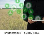 internet of things agriculture...   Shutterstock . vector #525874561