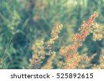abstract  beautiful field grass ... | Shutterstock . vector #525892615
