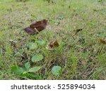 green leaf backdrop | Shutterstock . vector #525894034