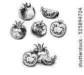 hand drawn set of tomato. retro ... | Shutterstock .eps vector #525894724