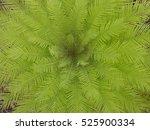 a bird's eye view of a tropical ...   Shutterstock . vector #525900334