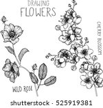 Stock vector drawing flowers wild roses and cherry blossom clip art or illustration 525919381