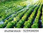 irrigation system in function... | Shutterstock . vector #525934054