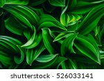 nice and textural green and... | Shutterstock . vector #526033141