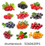 collage of wild berry isolated... | Shutterstock . vector #526062091