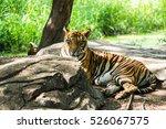bengal tiger | Shutterstock . vector #526067575